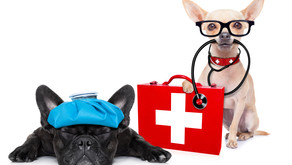 Emergency Planning for your Pets