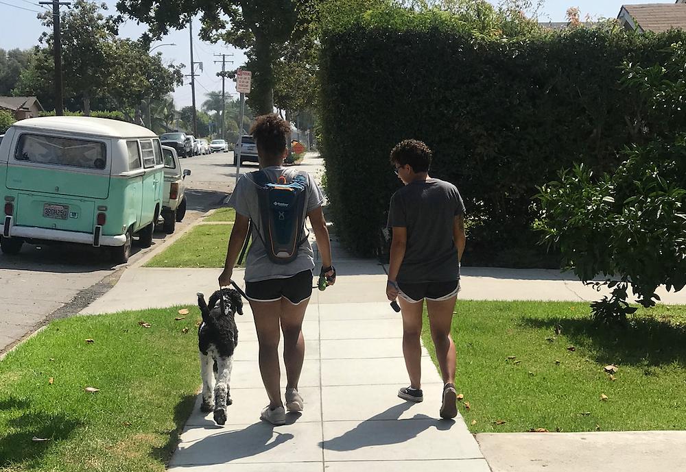 Dog Trainer Pet Sitter Training Long Beach California Bixby Knolls
