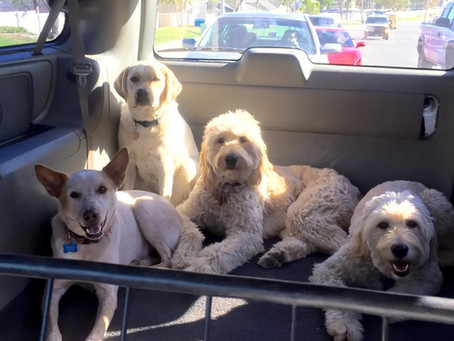 Summer Safety: How to Prevent a Dog From Overheating in a Car
