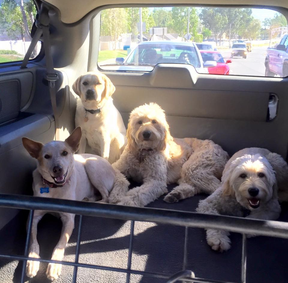 Summer Safety: How to Prevent a Dog From Overheating in a Car | Pet Waggin' Pet Care
