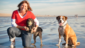 The Ultimate Pet-Friendly Guide to Long Beach