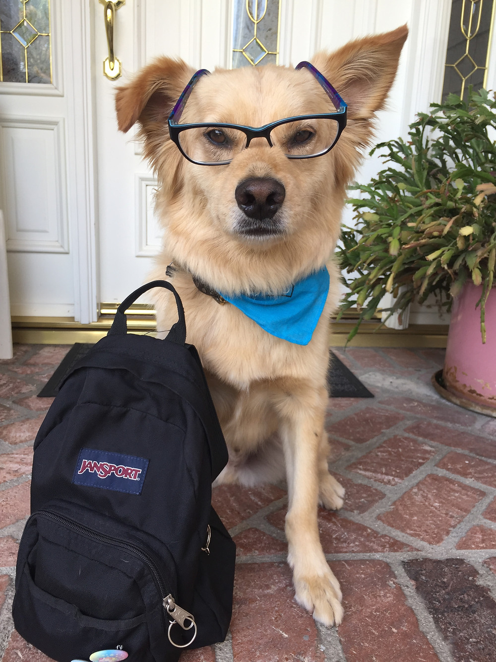 Your Pup And The Back To School Blues | Pet Waggin' Pet Care