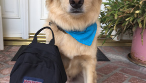 Your Pup and the Back to School Blues