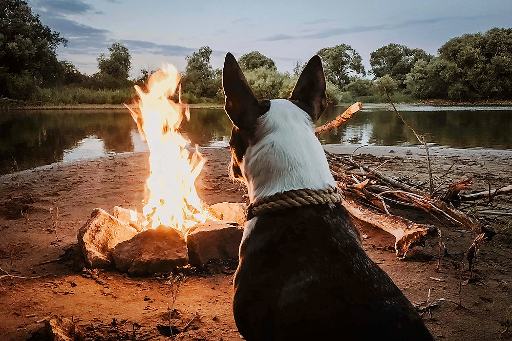 5 Tips For Camping with your Dog | Pet Waggin' Pet Care