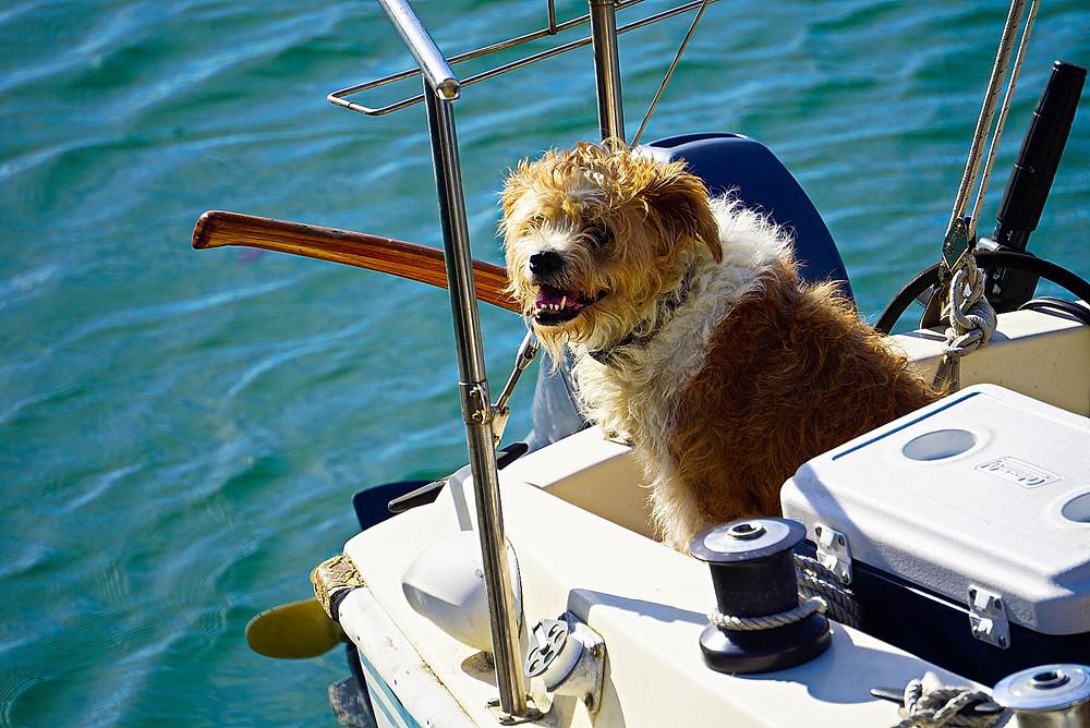 Dog on a boat enjoying day trip from Long Beach, CA