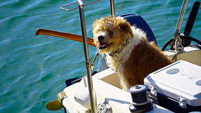 Pet-Friendly Day Trips From Long Beach, CA