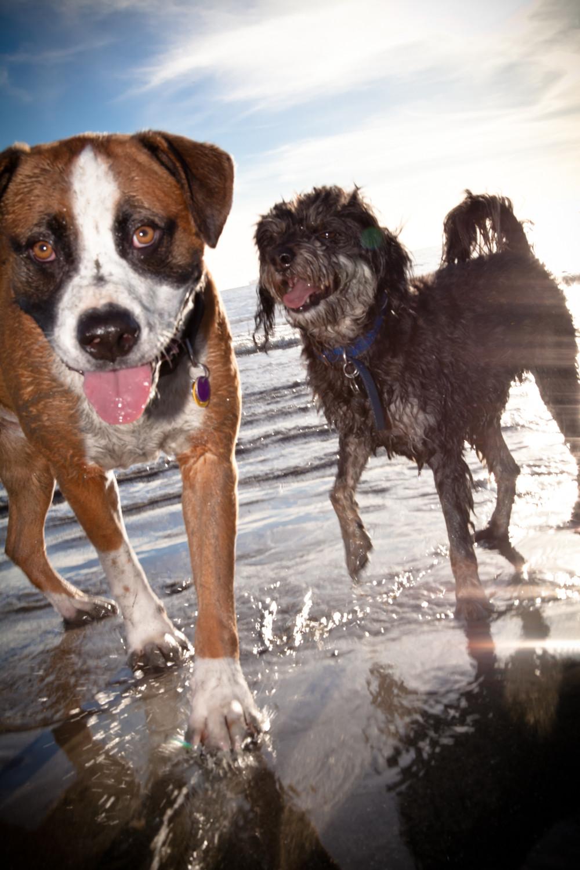 Beach Fun | Pet Waggin' Pet Care