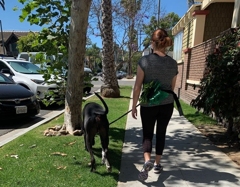 pet waggin' pet care on walk with dog