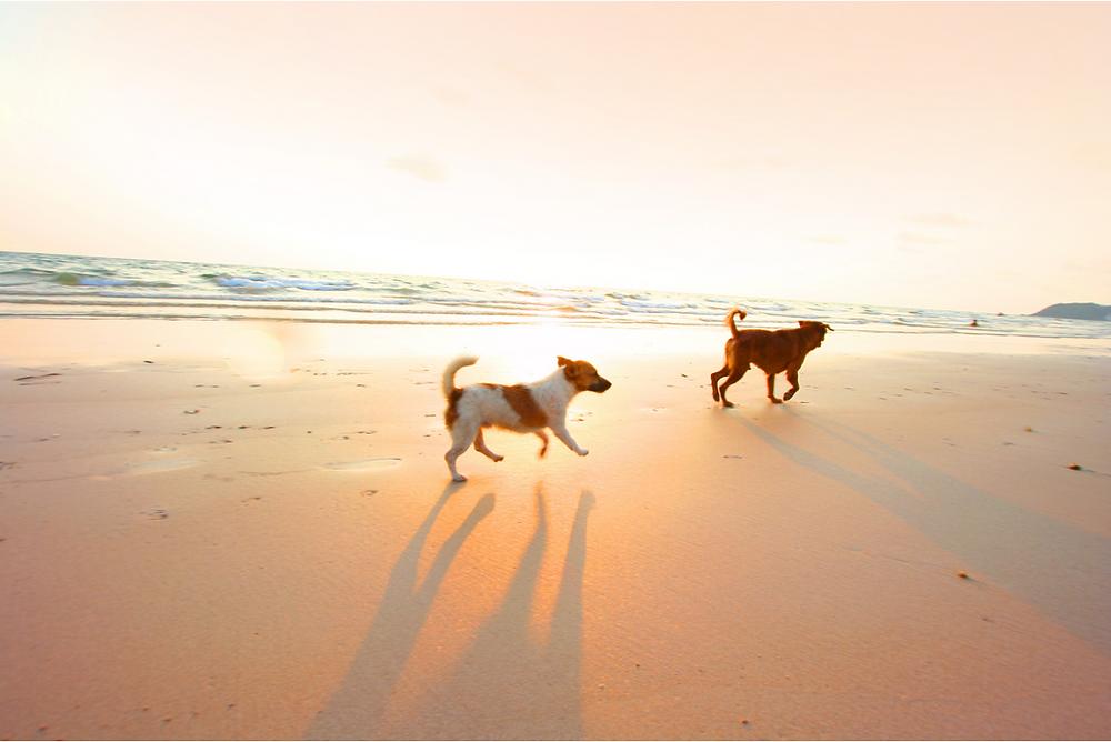 dogs at rosie's dog beach long beach ca
