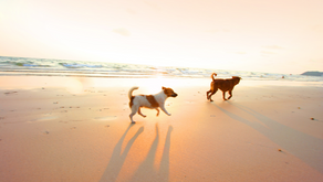 The Best Dog Beach In Long Beach (And Other Dog Friendly Beaches Nearby)