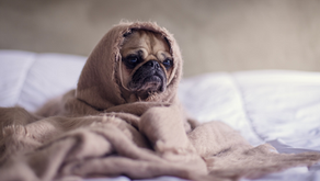 Seasonal Allergies For Your Long Beach Dogs & Cats