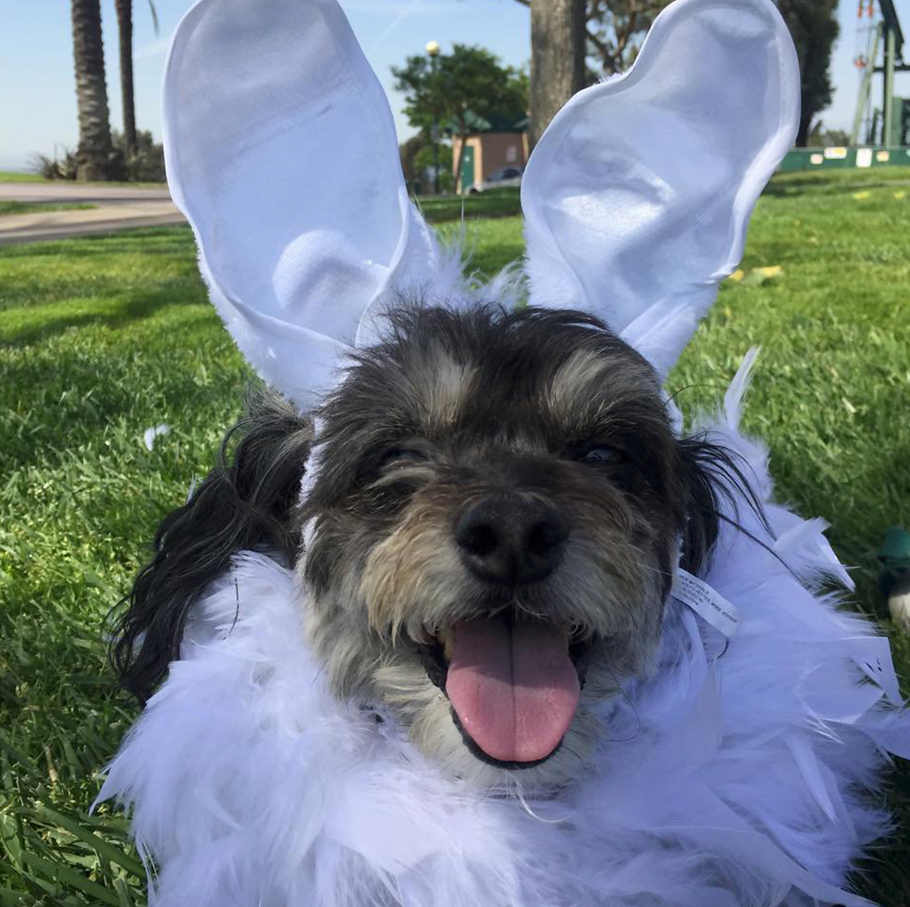 5 Tips For A Pet-Friendly Easter | Pet Waggin' Pet Care