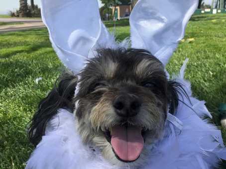 5 Tips For a Pet-Friendly Easter