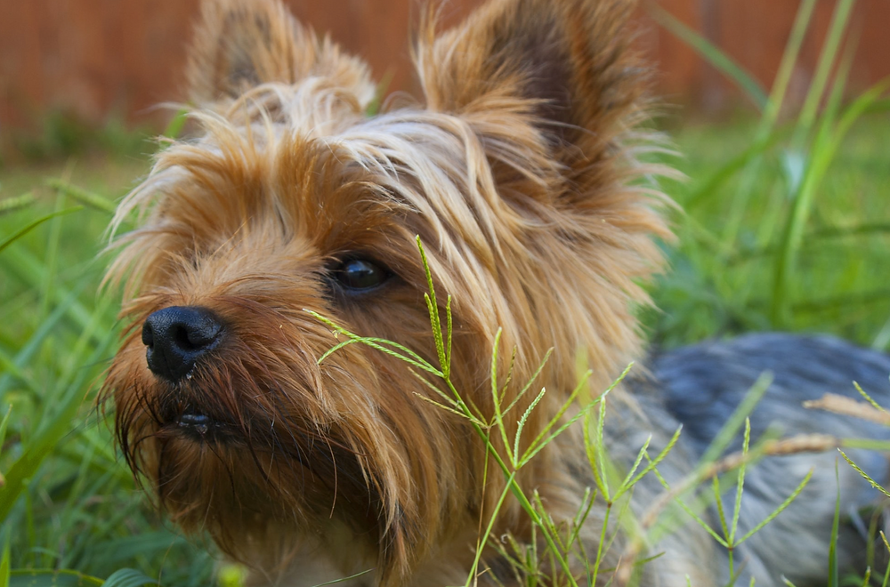 My Dog Is Itchy | Long Beach and Signal Hill | Pet Waggin' Pet Care