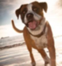 doggie in Long Beach