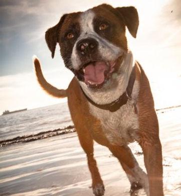 Scout Hobbs - dog on long beach