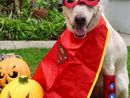 Halloween Pet Safety