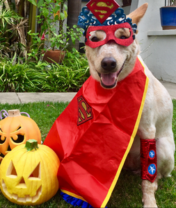 Halloween Pet Safety | Pet Waggin' Pet Care