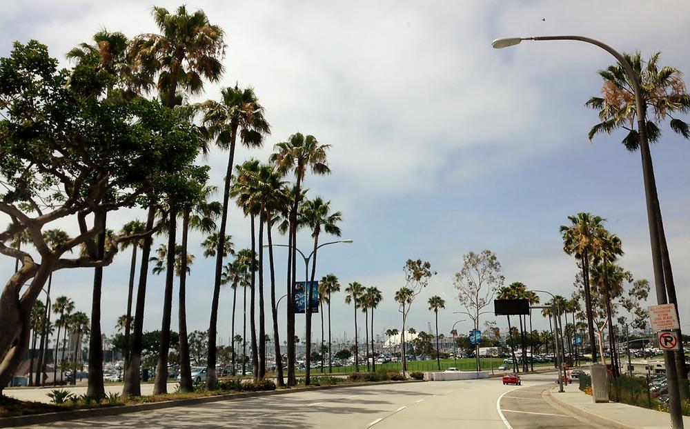 Long Beach Summer Activities For Dogs