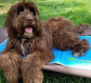 Cooling Mat For Dogs in Long Beach