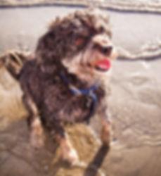 puppy in Long Beach