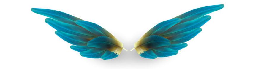 Wings resized.jpg