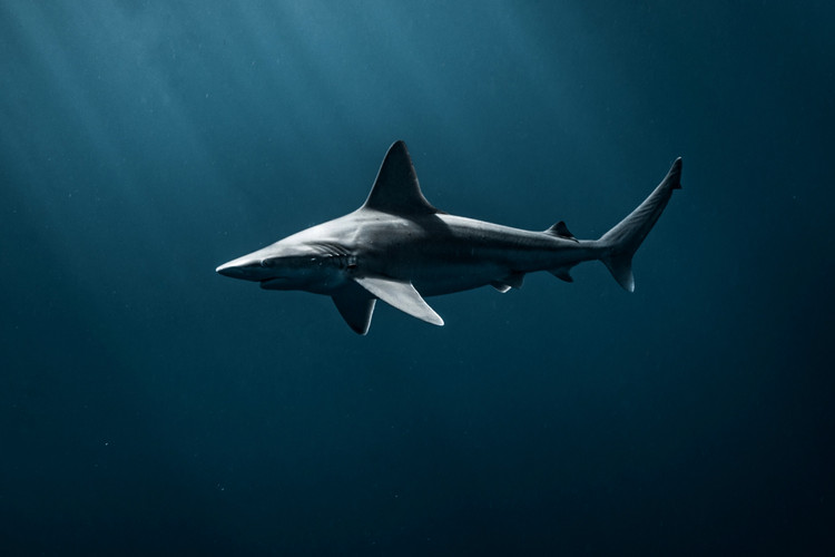 SharkNewest (1 of 1)_edited.jpg