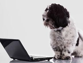ISS_4935_07092 Dog Laptop_Grey.jpg