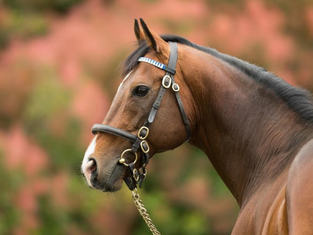 GOFFS PREMIER YEARLING SALE : DGA RACING ACQUIRE FAST COMPANY FILLY.