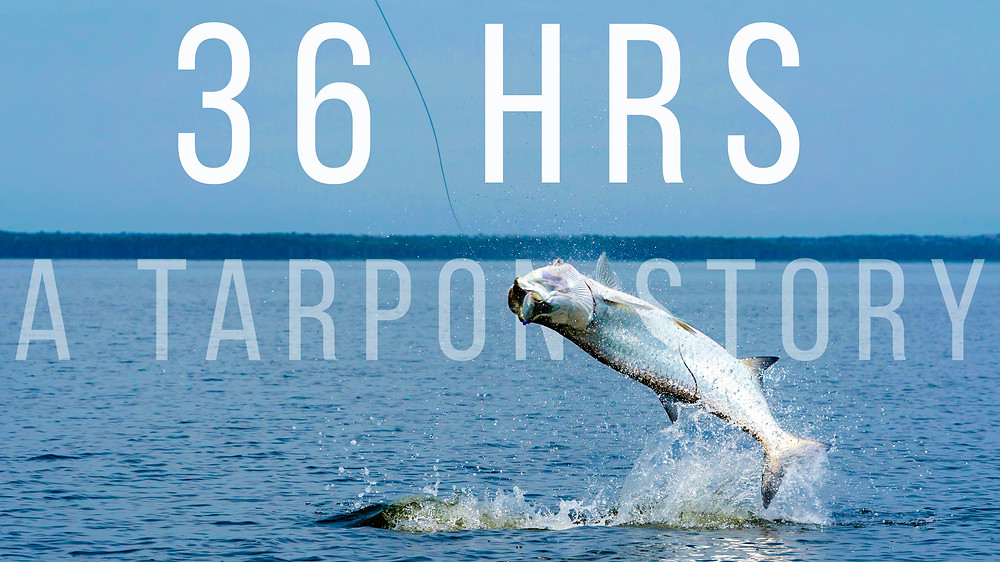 Flyfishing for Tarpon in Florida's Backcountry