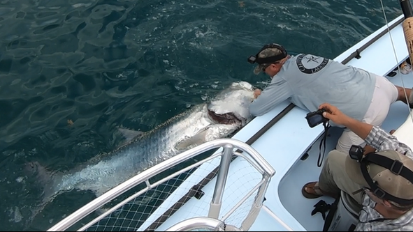 KT with his Monster Tarpon on fly.