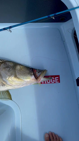Big Snook and the Mullet Run