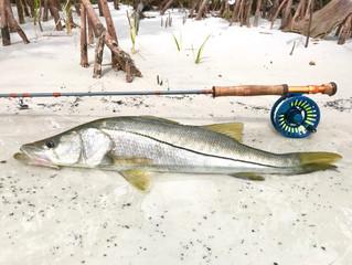Mondo flyfishing 8wt review.