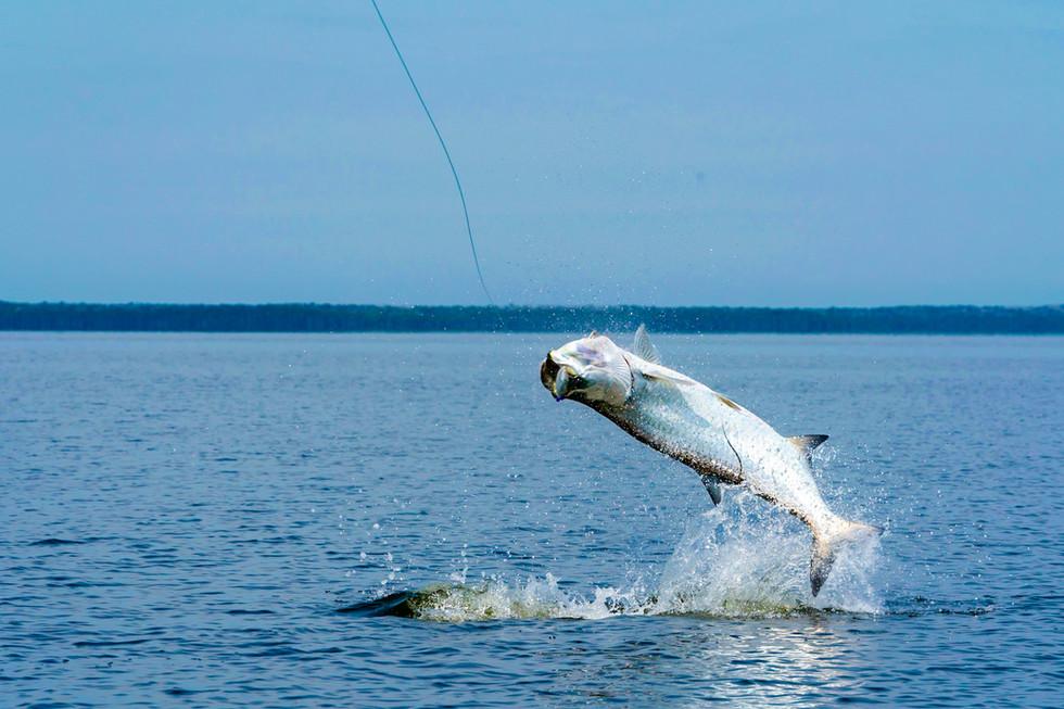 Jupiter Charter Fishing