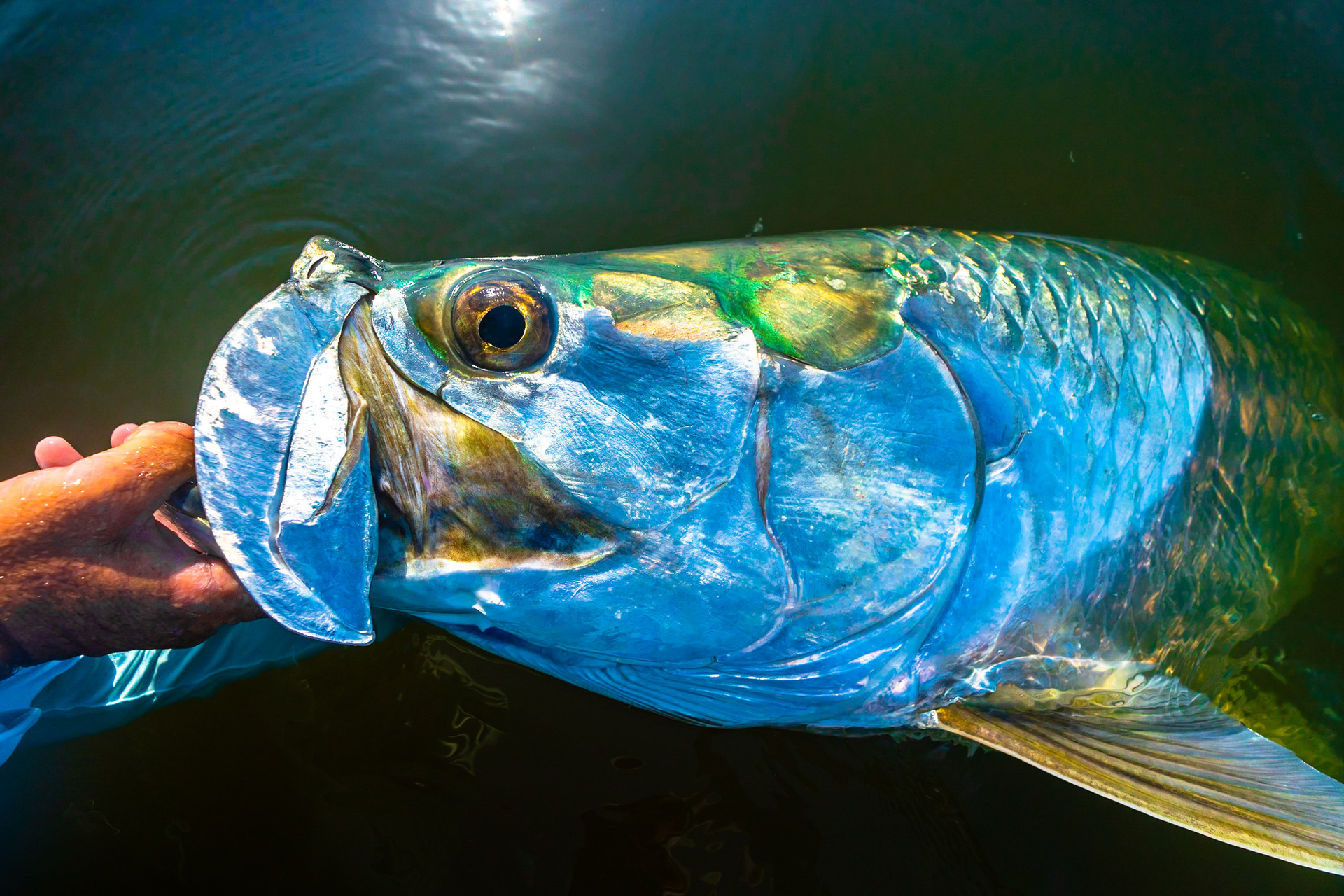 Fly Fishing Charters in the Everglades National Park