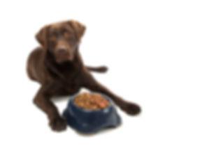 grain-gluten-free-diet-dogs.jpg
