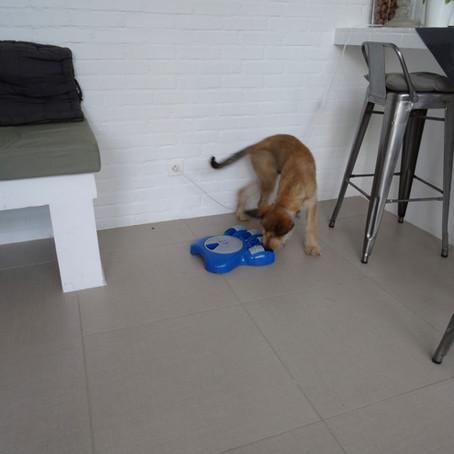 Le jeu pour le chien : est-ce important ? quel rôle ?