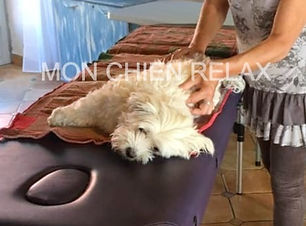 Formation massage canin