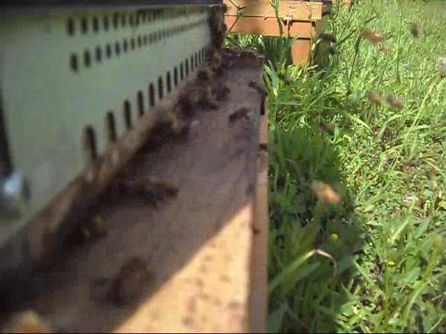 L'entrée d'une ruche