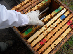 Cadres dans ruche