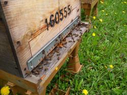 Entrée de ruche