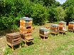 Ruches apiculteur judet