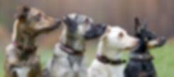 Handgemachte Hundehasbänder aus Leder von Lillebror for dogs
