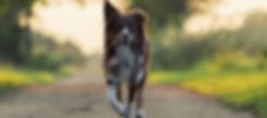 Hundeleinen aus Leder Lillebror for dogs