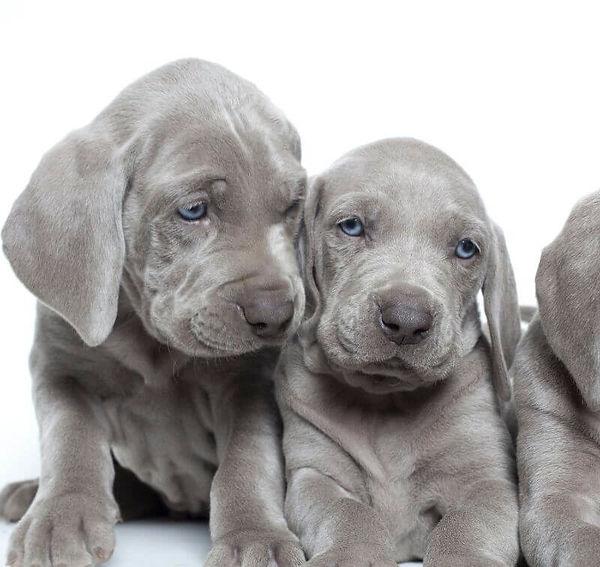 puppypic.jpg