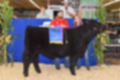 2018champ-steer.jpg