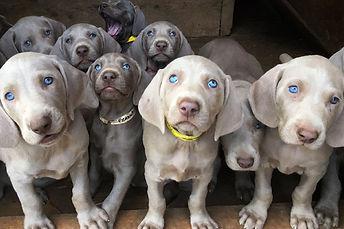home-puppies.jpg