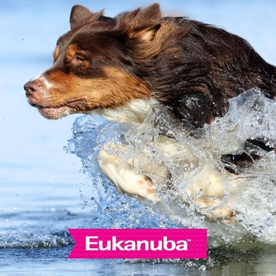 borde_agua_eukanuba_edited.jpg