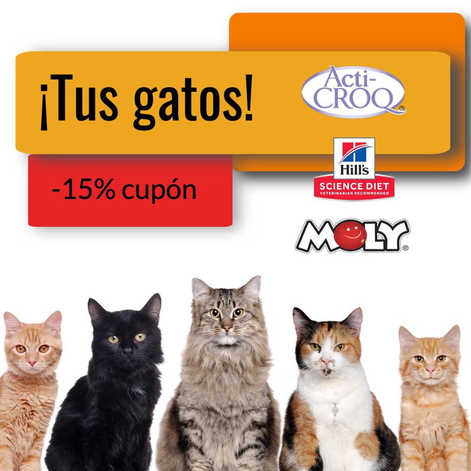 De todo gatos (1).jpg