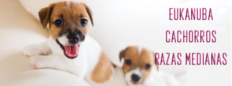 eukanuba raza mediana cachorros.jpg